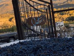 qutori wines paonia colorado