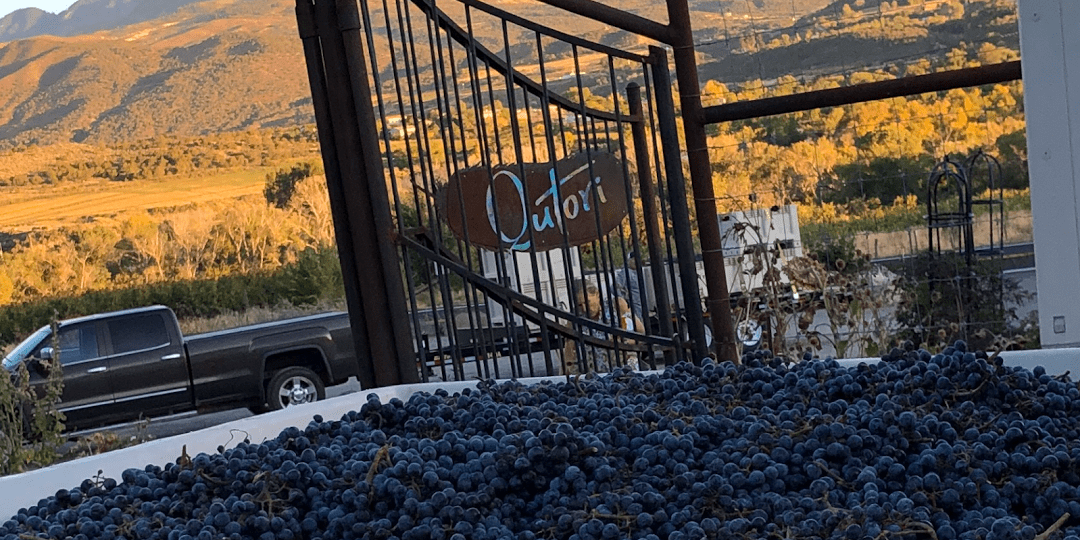 qutori wines paonia colorado
