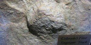Stegosaurus Dinosaur Track Morrison Formation Colorado