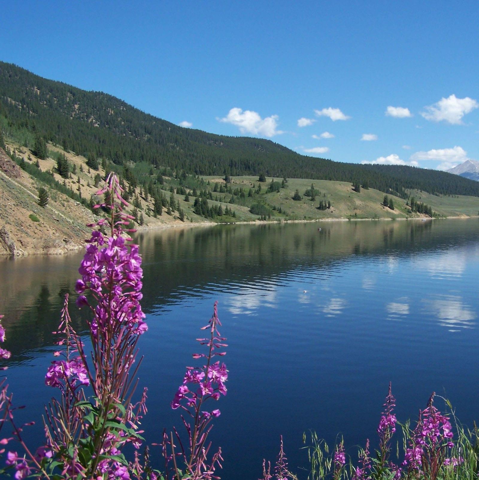 Taylor Park Reservoir Flowers Almont CO