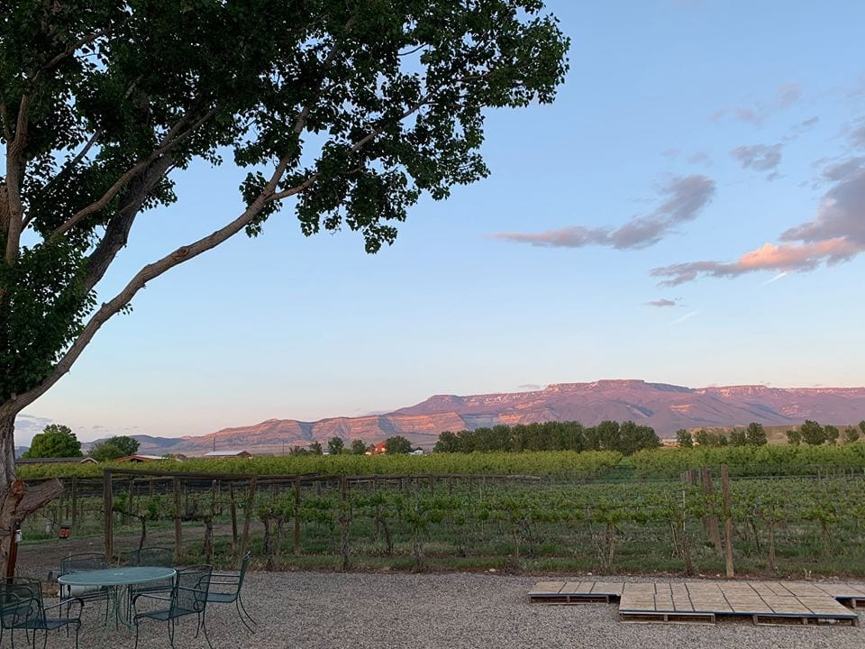 views from mesa park vineyards