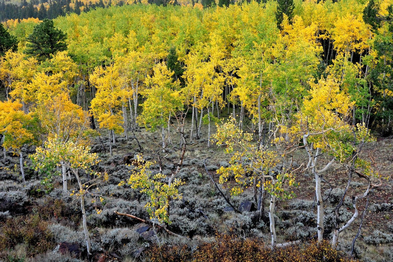 Outside of Salida at Marshall Pass, Colorado