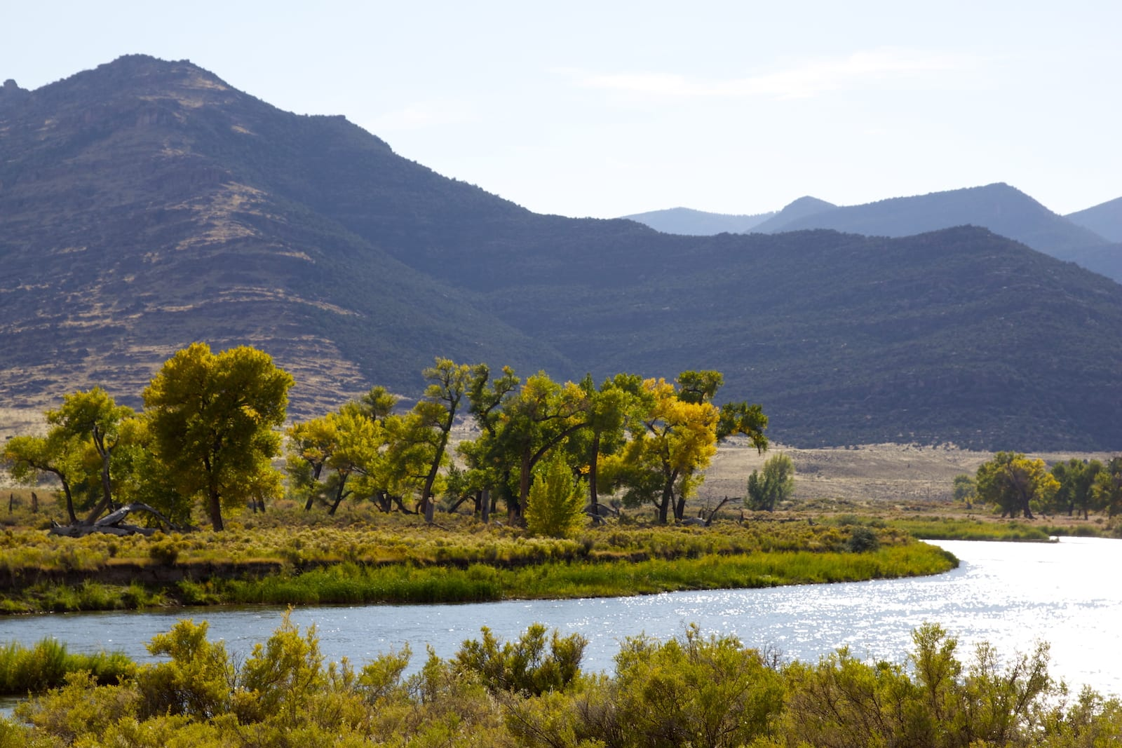 Browns Canyon National Wildlife Refuge Green River Cottonwood Trees
