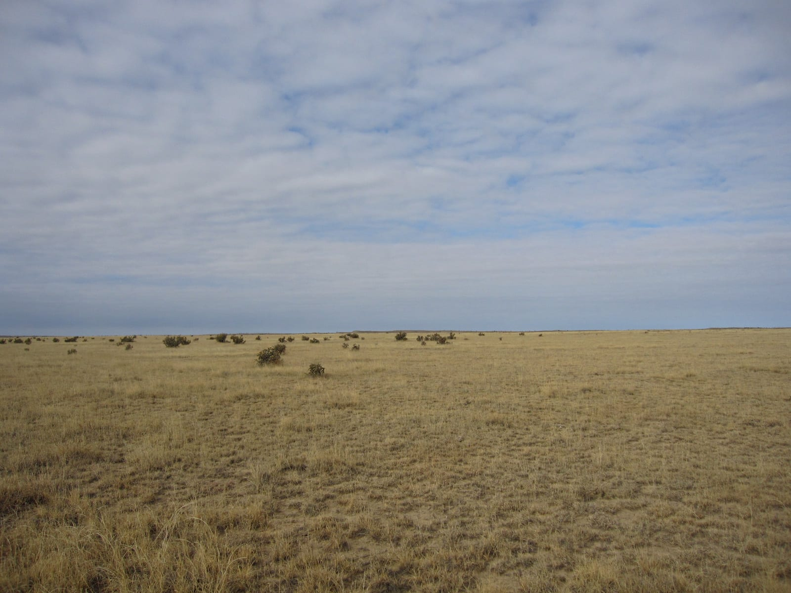 Comanche National Grassland Higbee CO