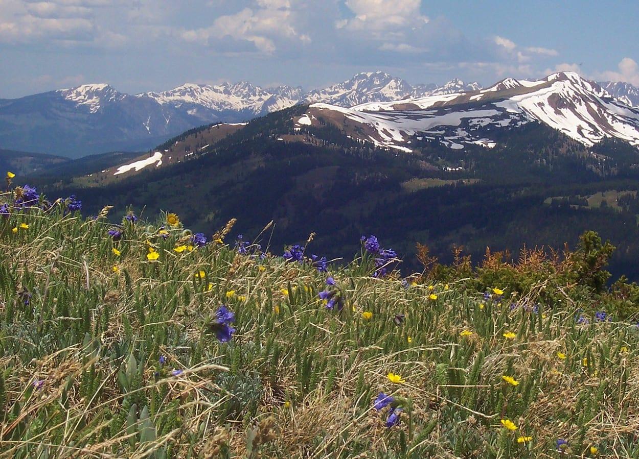 Copper Mountain Summer Wildflowers on Spaulding Ridge