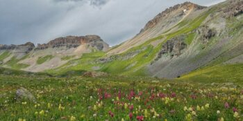 ice lake basin wildflowers