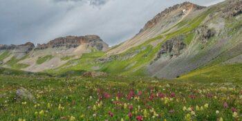 ice lake basin wildflowers