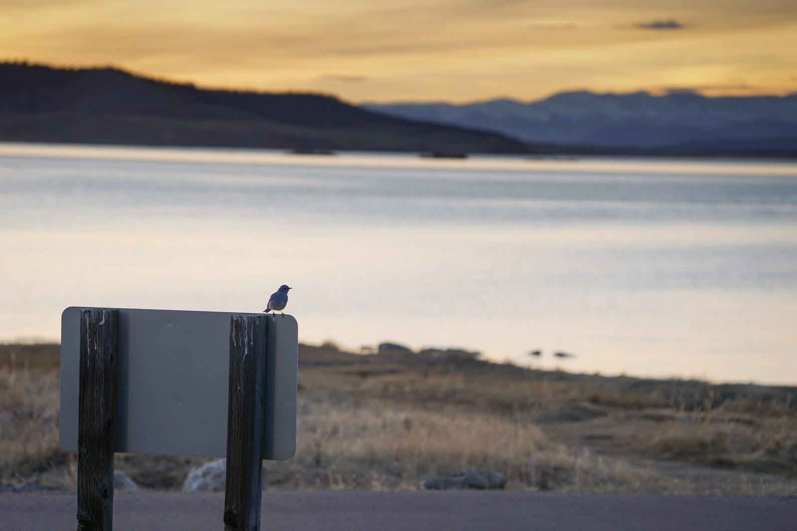 Eleven Mile Reservoir Sunset Bird on Sign