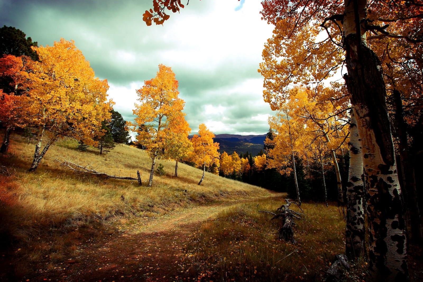 Mueller State Park Autumn Colors Divide Colorado