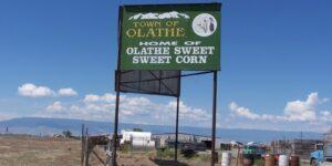 Olathe Sweet Corn Famous Colorado Foods