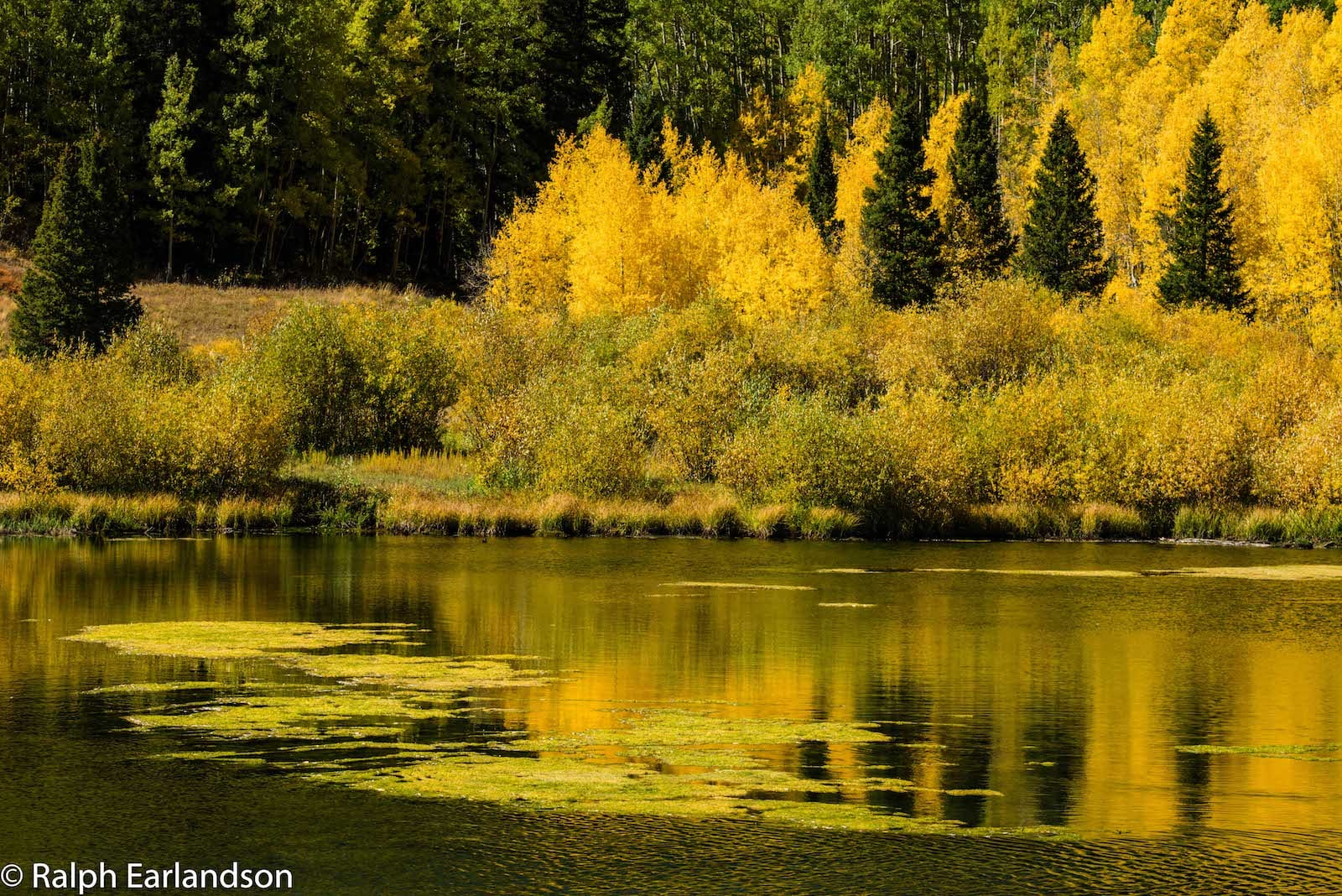 Priest Lake Fall Reflections Ophir Colorado