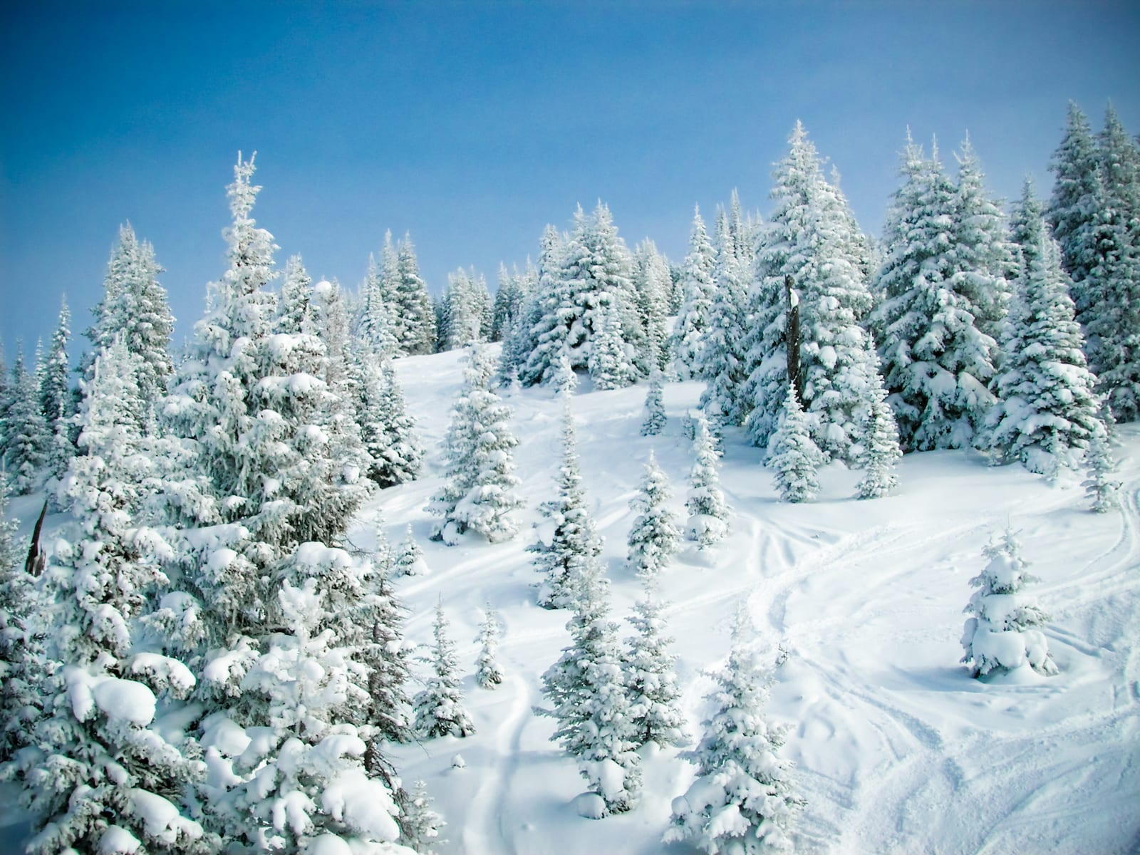 Blue Sky Basin Powder Day Vail Ski Resort