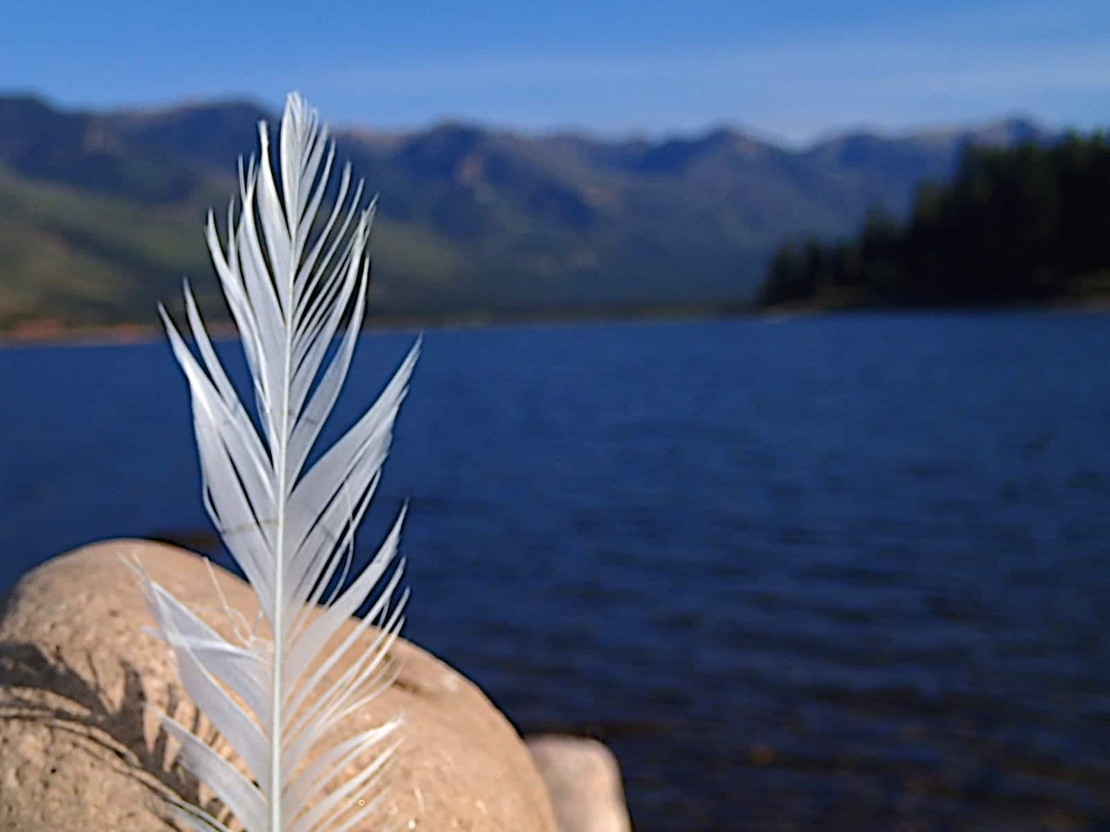 Vallecito Reservoir Bayfield CO Feather