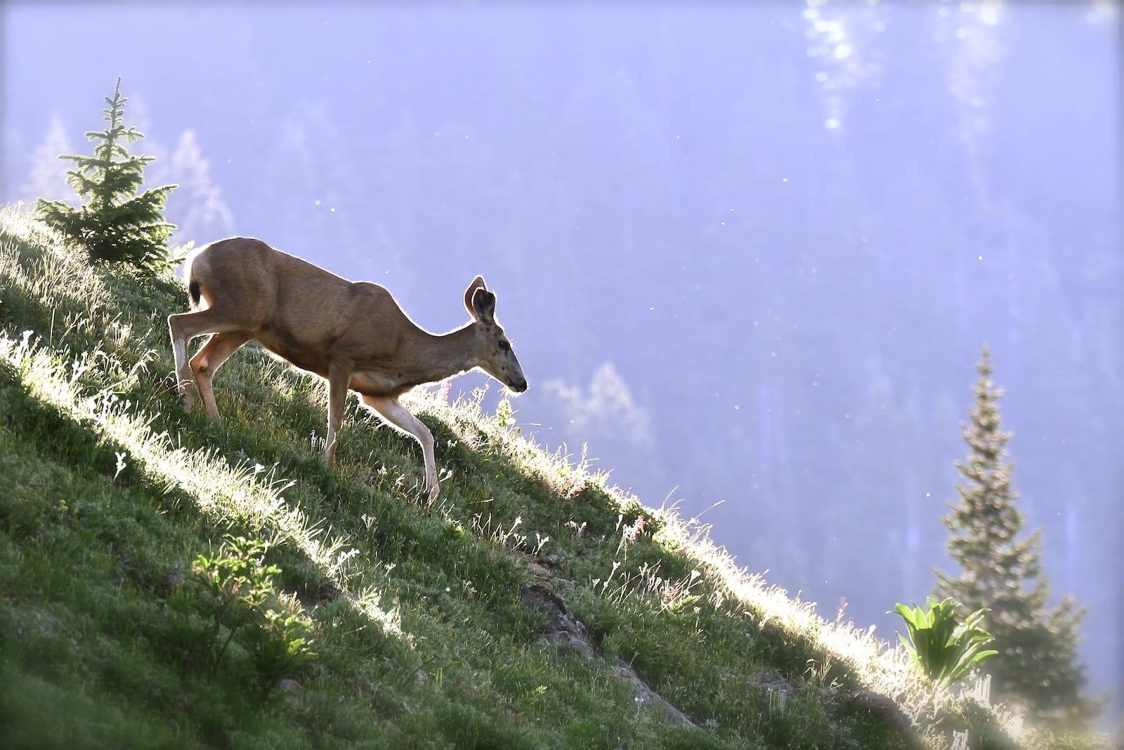 Washington Gulch Trail Deer Crested Butte CO