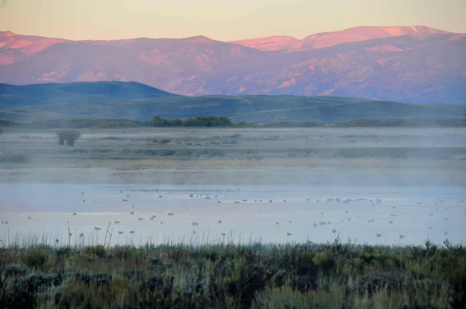 Arapaho National Wildlife Refuge Foggy Sunrise Waterfowl