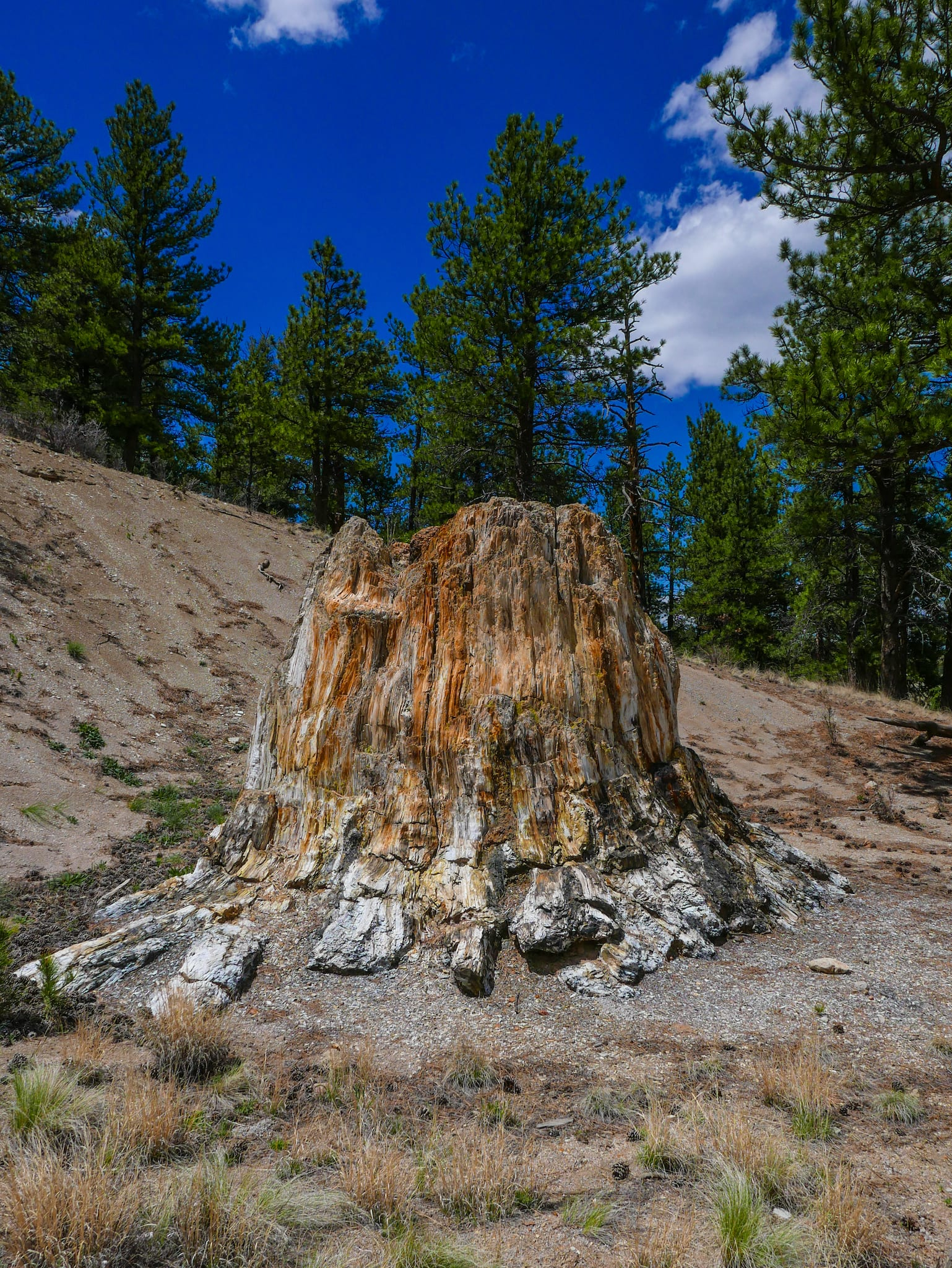 Florissant Fossil Beds National Monument Petrified Tree Stump