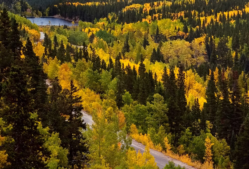 Fall Aspens on Guanella Pass Road near Georgetown CO