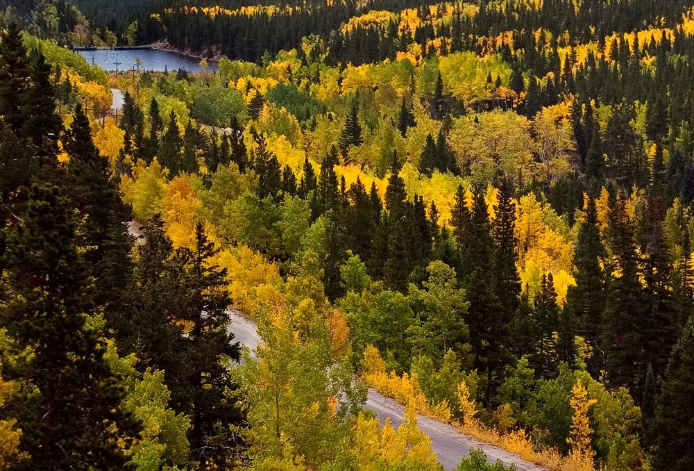 Fall Aspens on Guanella Pass Road near Georgetown CO