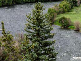 Rio Grande River near Creede CO