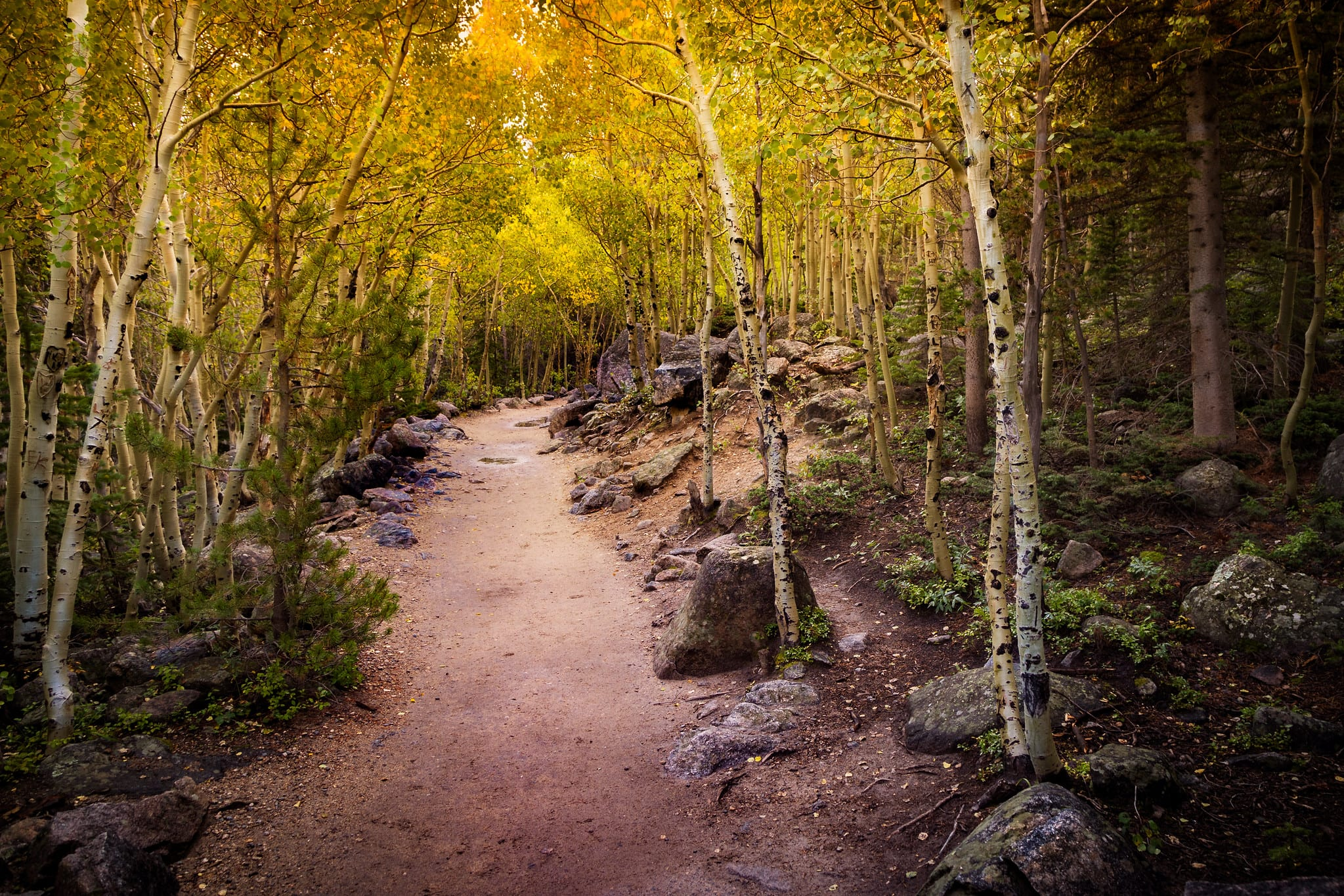 trail to alberta falls in rocky mountain national park