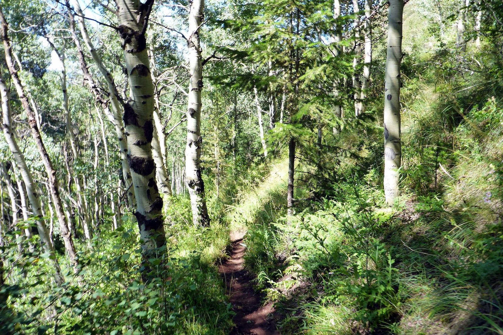 Buck Creek Trail Vail Colorado