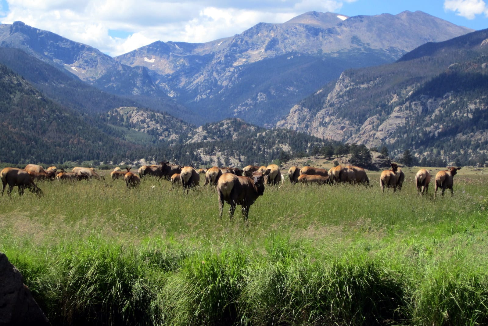 Colorado Front Range Elk Rut RMNP Estes Park CO