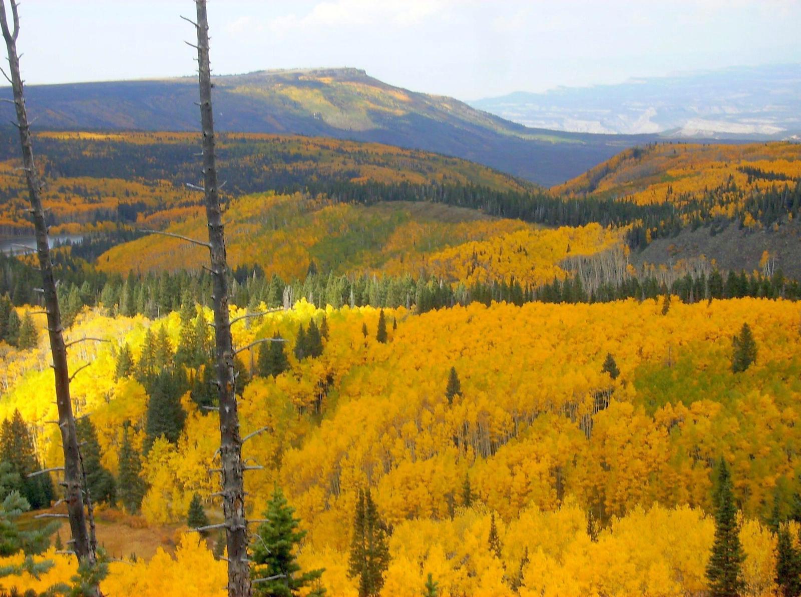 Grand Mesa Colorado Autumn Colors