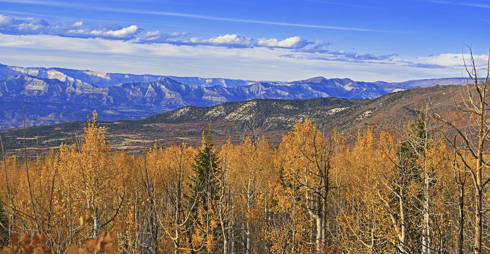 Grand Mesa National Forest Autumn Aspens Colorado