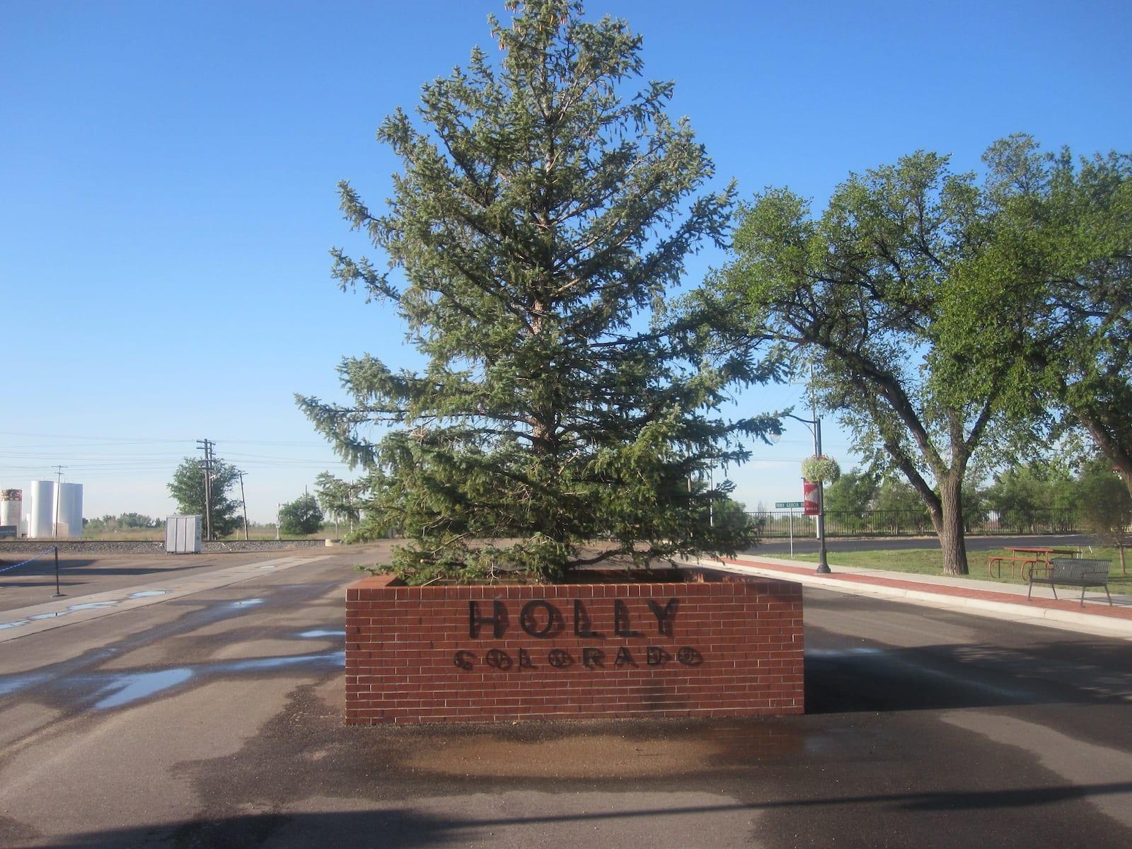 Holly CO Spruce Tree
