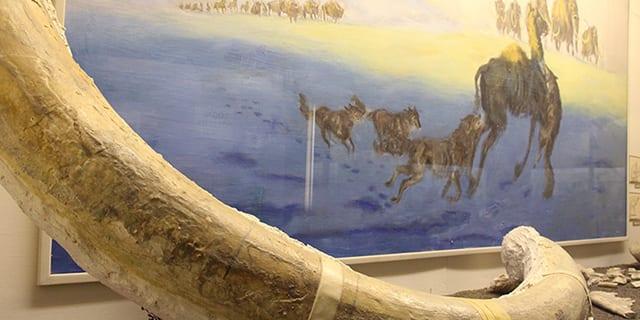 Louden-Henritze Archeology Museum Trinidad CO Mammoth Husk