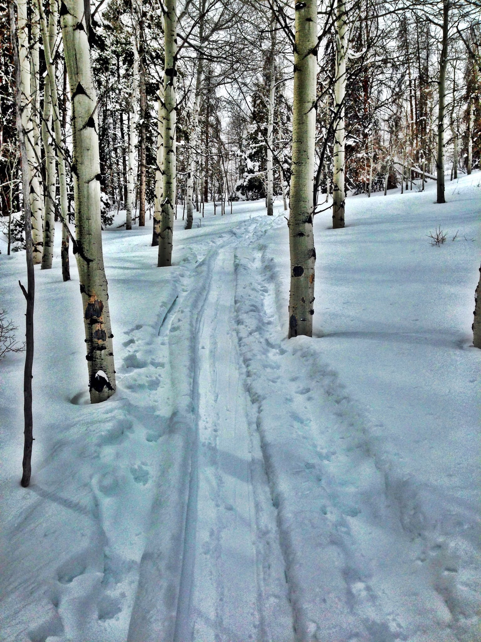 Meadow Mountain Trail Vail Colorado