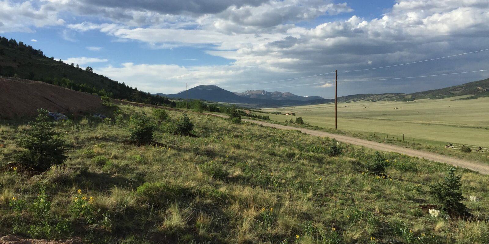 Colorado Native Plants Landscaping Fairplay CO