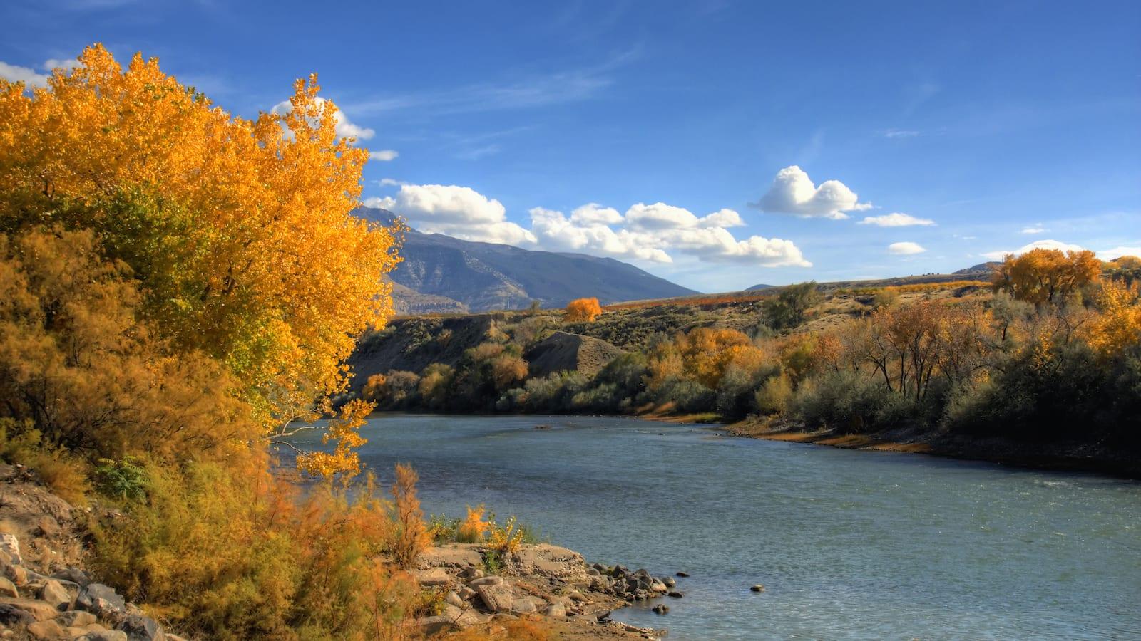 Colorado River Trail Autumn Palisade CO
