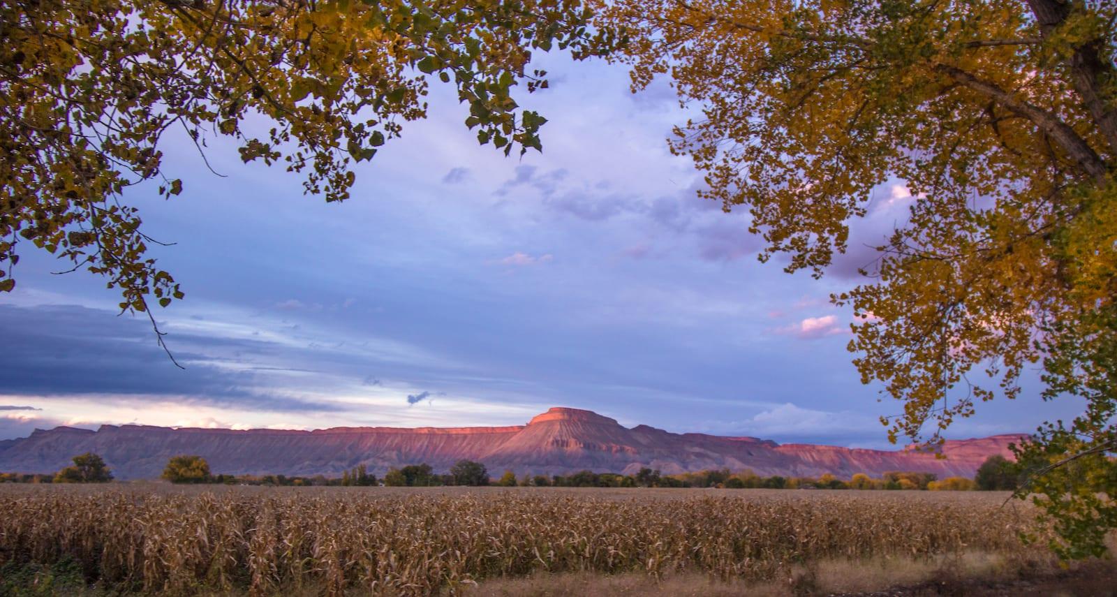 Palisade CO Grand Valley Farm
