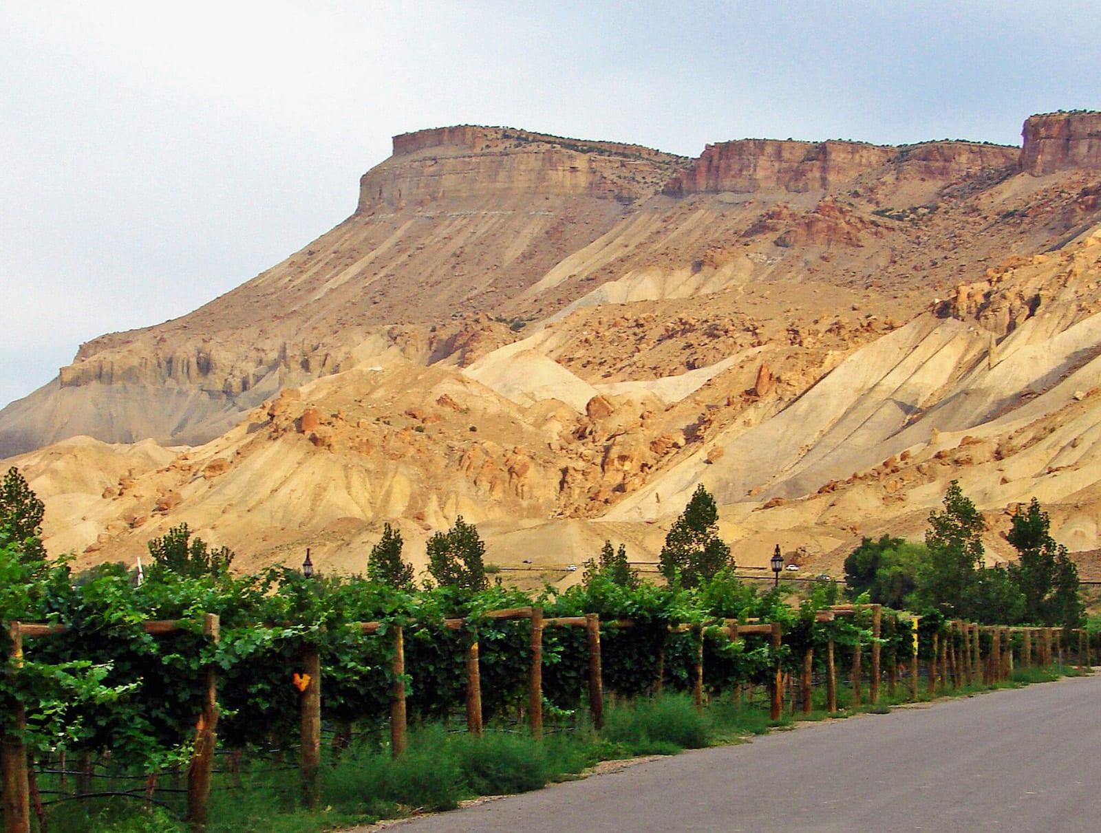 Palisade CO Wine Vineyards Mount Garfield