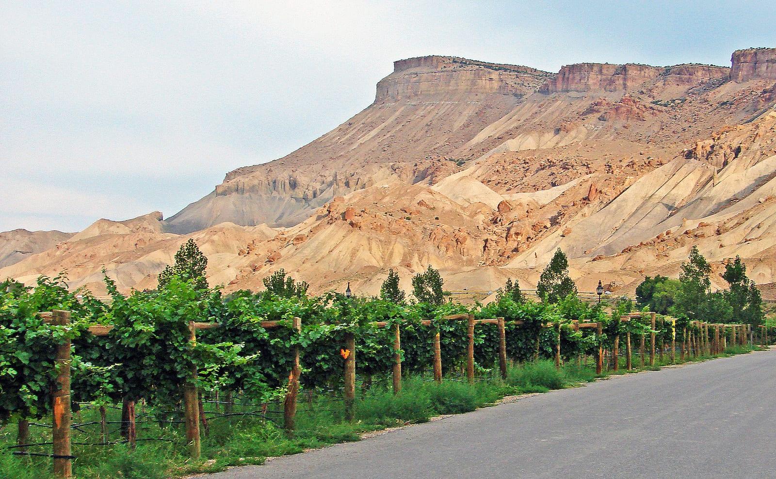 Palisade CO Mount Garfield Wine Vineyard