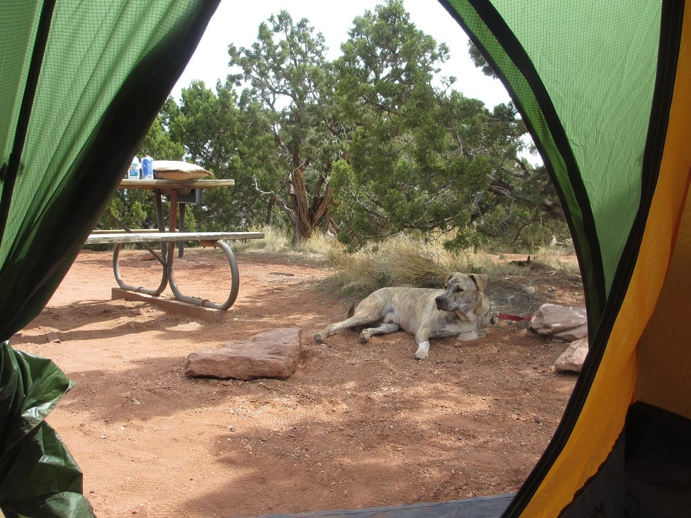Saddlehorn Campground Colorado National Monument View from Inside the Tent of Dog