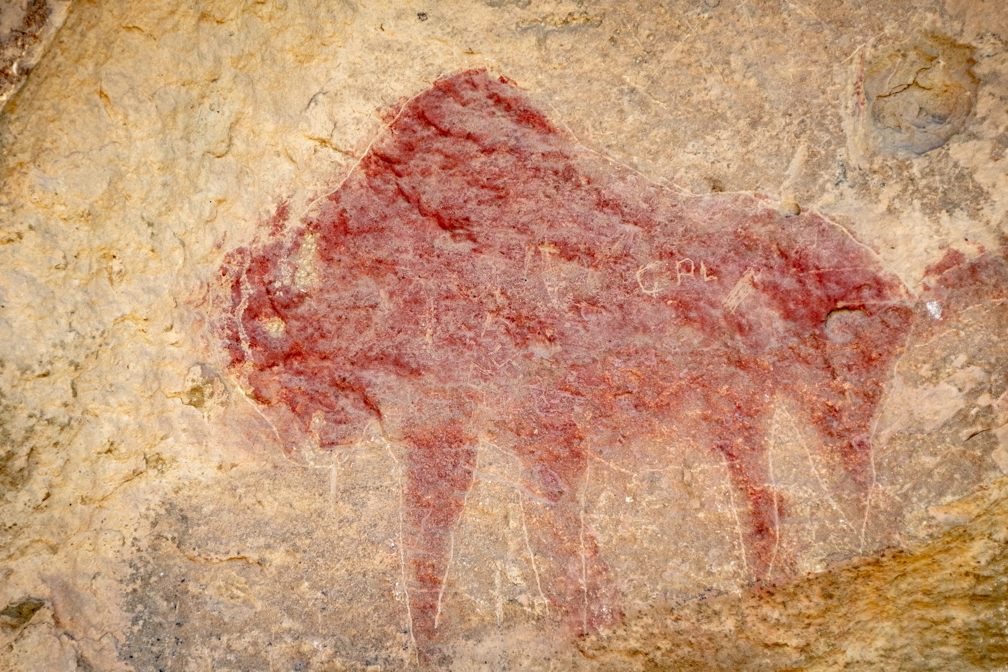 Ute Mountain Tribal Park Modern Ute Pictograph of Bison