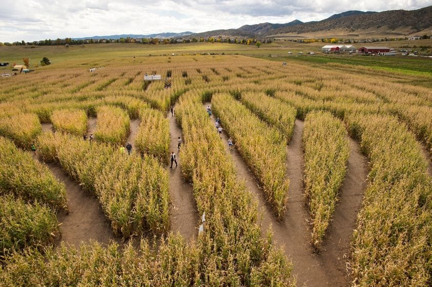 image of corn maze chatfield farms
