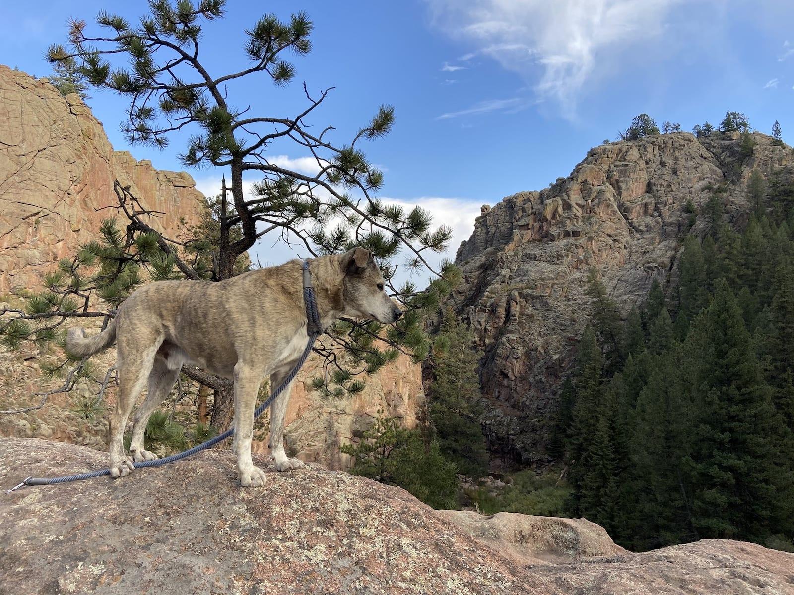 Guffey Gorge Ozzie Dog