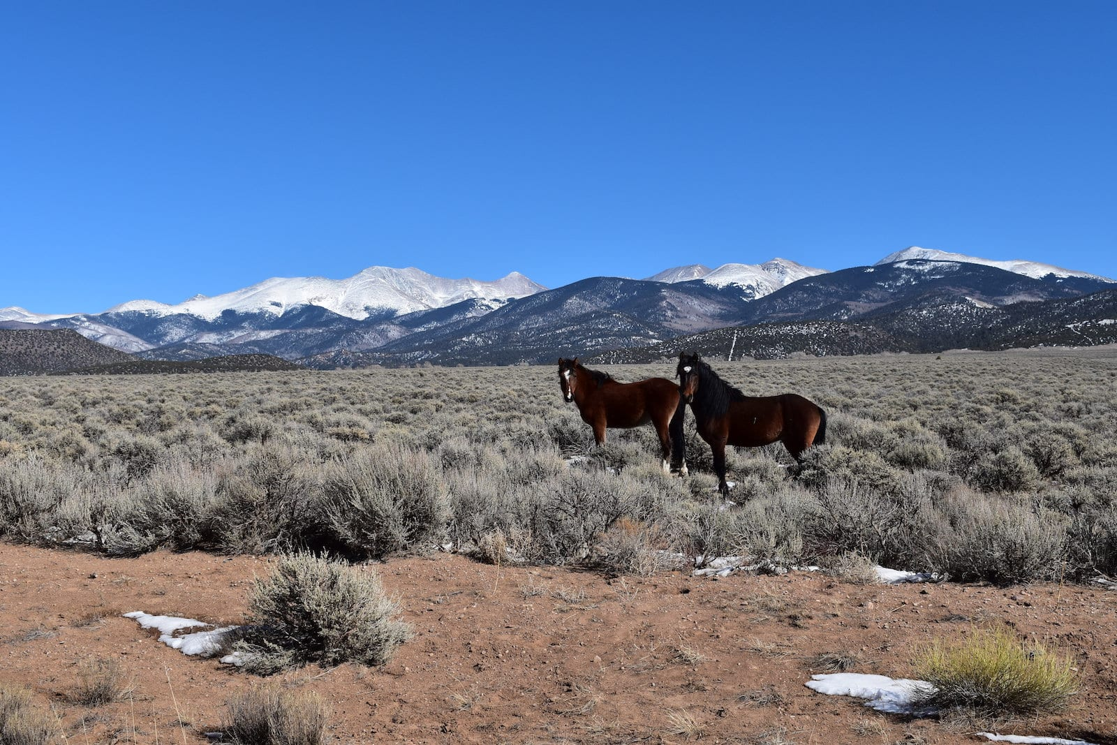 Sanchez Reservoir Colorado Horses and Culebra Peak