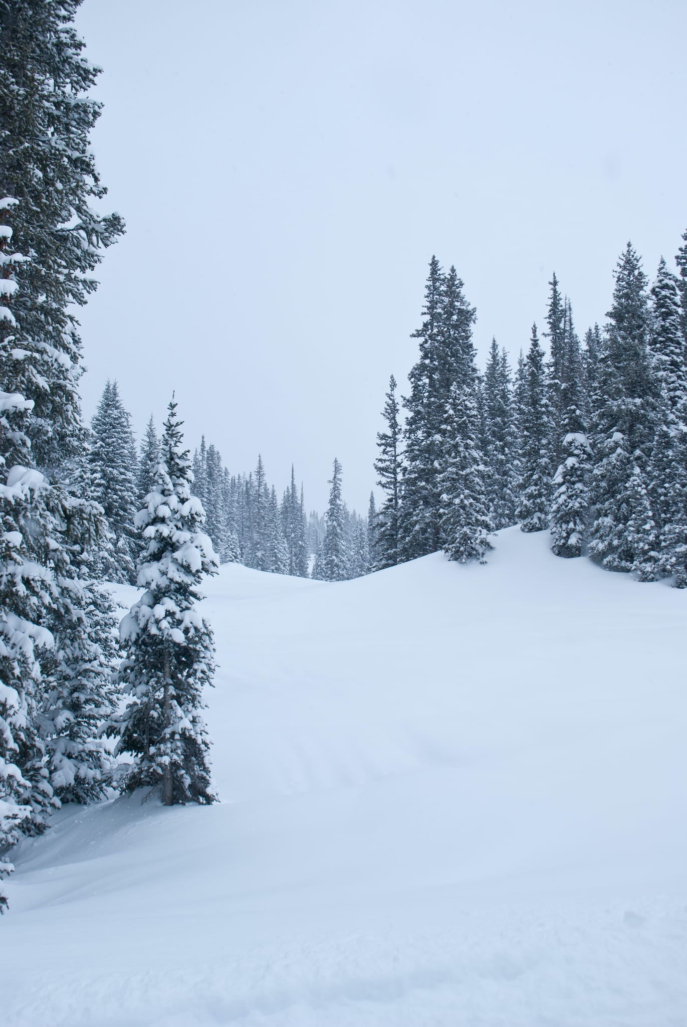 Crested Butte Ski Trail Powder Day