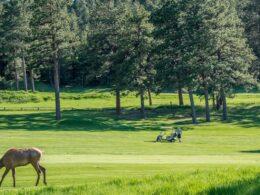 Evergreen Golf Course Deer Colorado