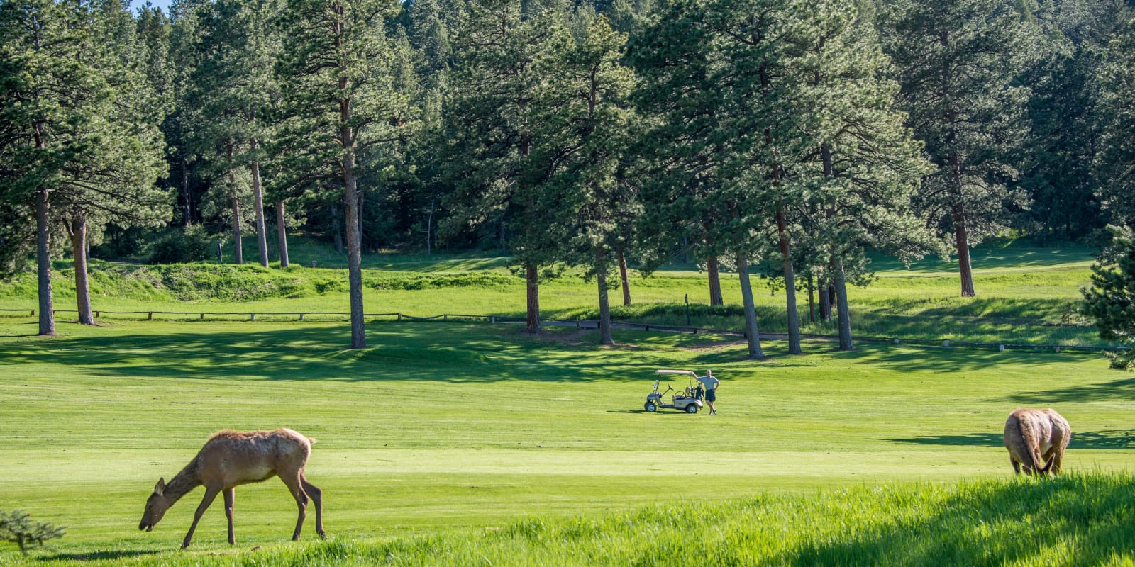 Evergreen Golf Course Deer Colorado
