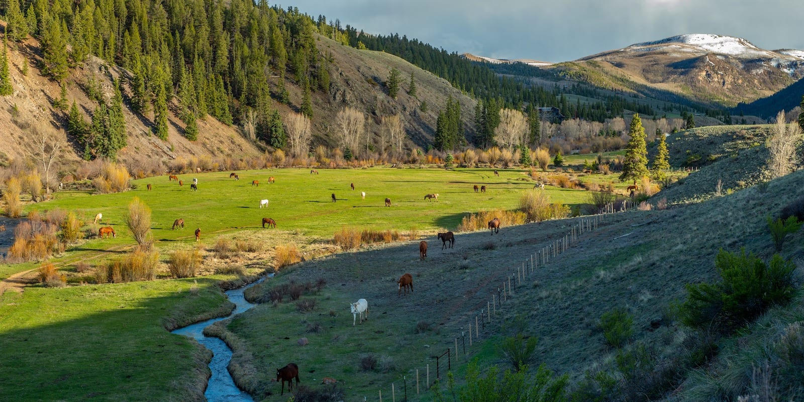 Image of horses roaming the property at 4UR Ranch, CO