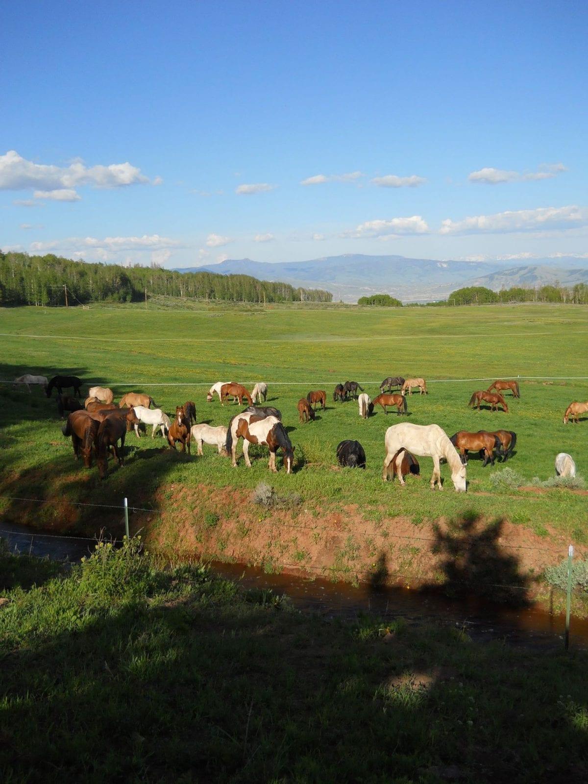 Latigo Ranch, CO