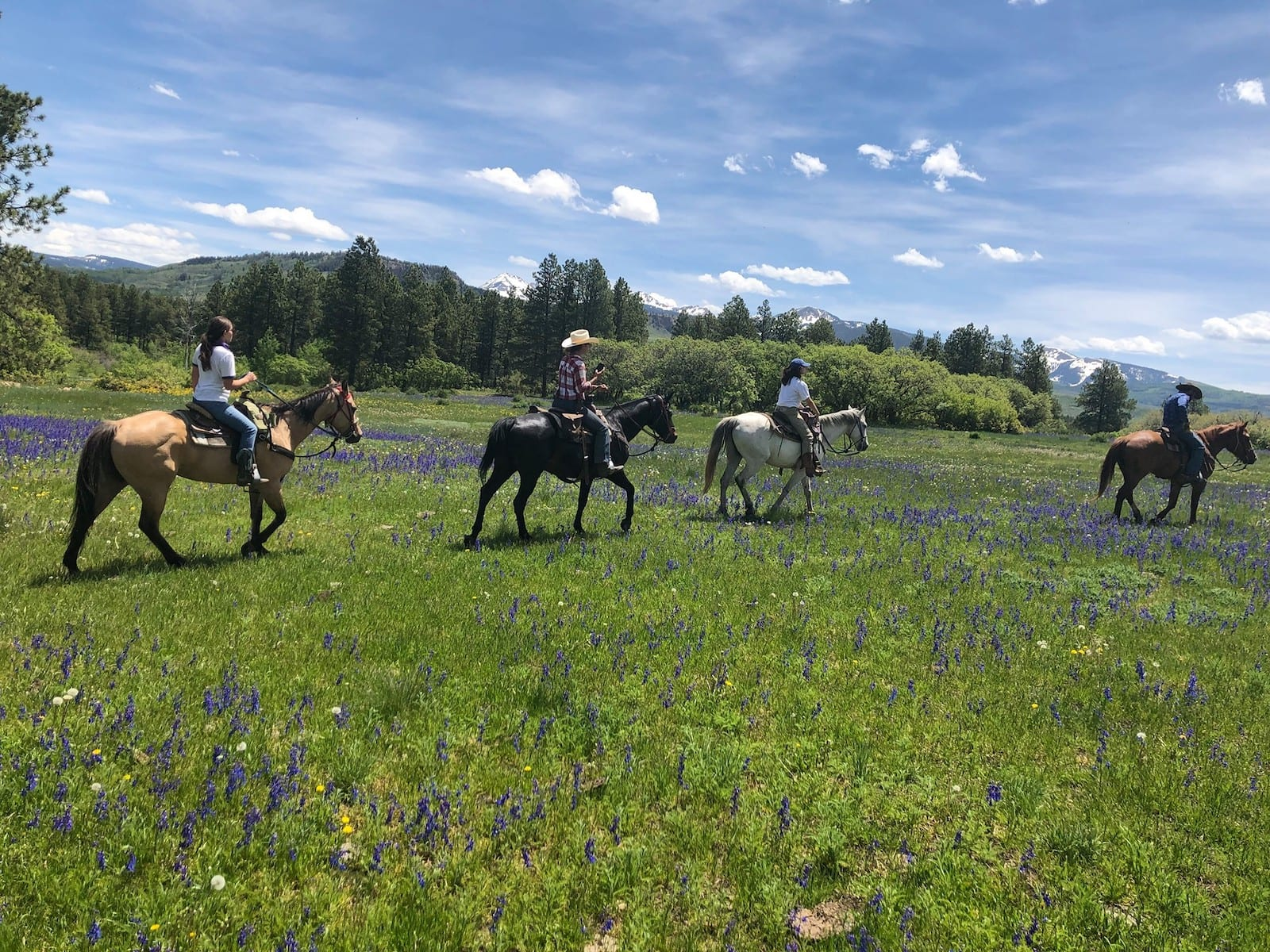 Image of 4 people riding horses in a flower covered field at Majestic Dude Ranch, CO