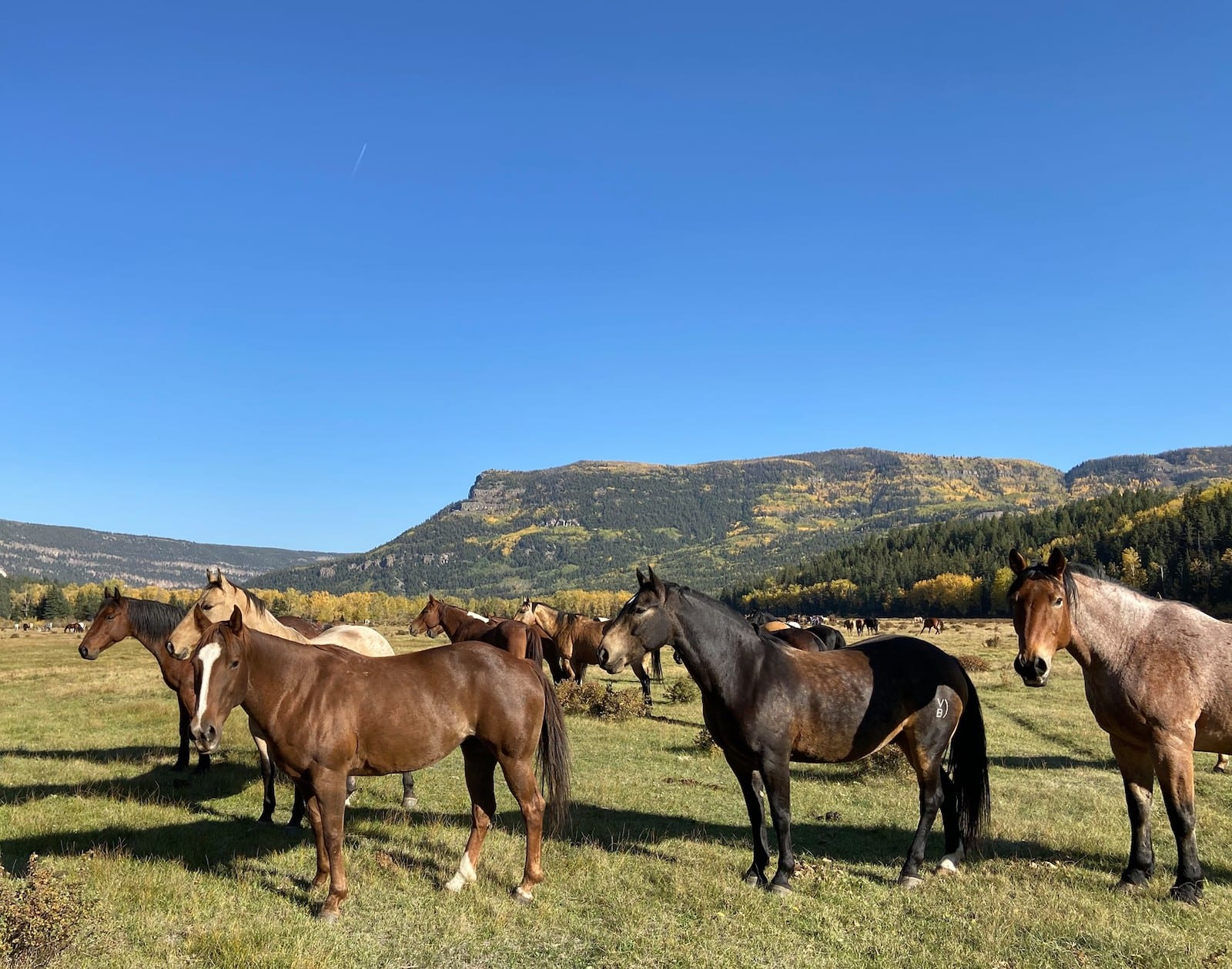 Image of horses at the Rainbow Trout Ranch, CO