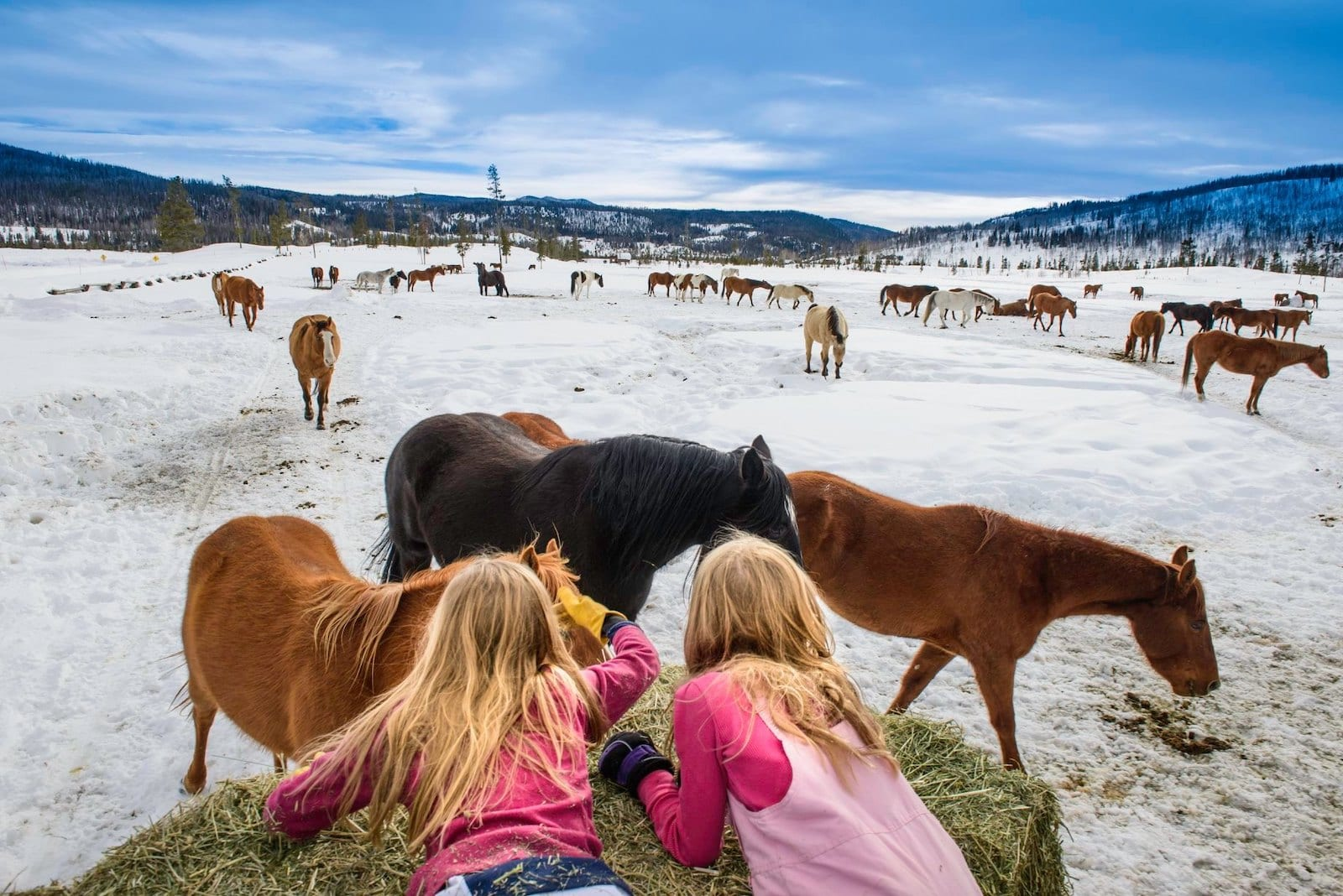 Image of two young girls petting the horses at Vista Verde Ranch, CO