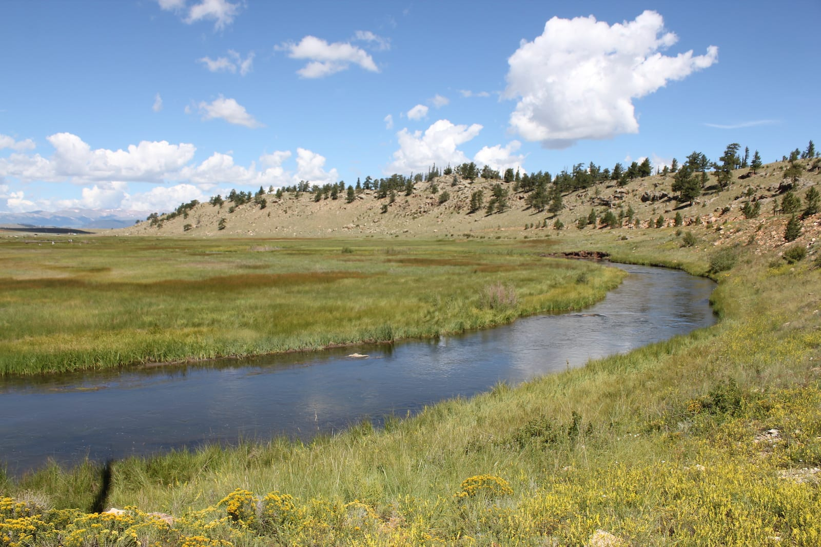 South Platte River Hartsel Colorado Gold Medal Waters